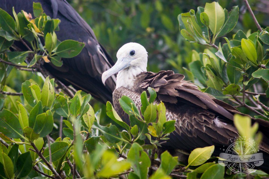 Isla de los pájaros Celestún