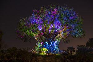 Arbol de la Vida en la Noche, Animal Kingdom Orlando